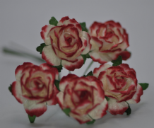 RED OFF WHITE FLORIBUNDA (2.5-3.0cm) Mulberry Paper Roses